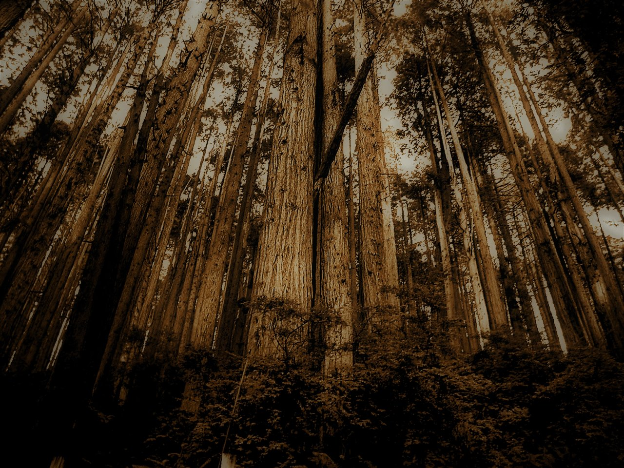 forest_ip10